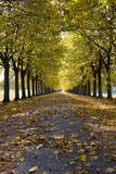 Autumnal alley. Road running through an autumnal tree alley Royalty Free Stock Photography