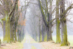 Autumnal alley. With a path Royalty Free Stock Photography