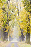 Autumnal alley. With a path Royalty Free Stock Images