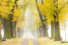 Autumnal alley. With a path Stock Images