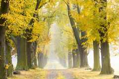 Autumnal alley Royalty Free Stock Photography