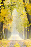 Autumnal alley. With a path Royalty Free Stock Photo