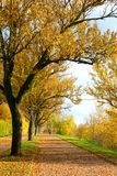 Autumnal alley. Autumnal beauty of nature. Alley Stock Photo