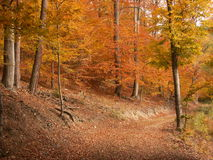 Autumnal alley. Glade in autumnal brown - Central Bohemia Royalty Free Stock Image