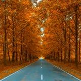 Autumnal alley. Autumn season background Stock Image