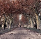 Autumnal alley. Beautiful alley with mansion in the end Royalty Free Stock Image