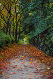 Autumnal alley. Image of autumnal alley, nature background Royalty Free Stock Image
