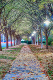 Autumnal alley in the park alon g the road Stock Images
