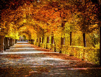 Autumnal alley in the park. Amazing autumnal alley in the park Royalty Free Stock Image
