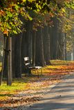 Park alley in autumn stock photo