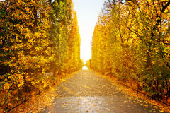 Autumnal alley in the park of Gdansk. Poland Royalty Free Stock Images