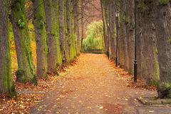 Autumnal alley in the park. Poland Royalty Free Stock Images
