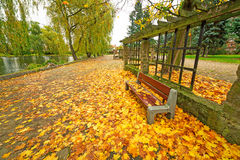 Autumnal alley in the park. Poland Royalty Free Stock Image