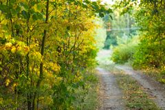 Autumnal alley, sandy road and colorful leaves Stock Image