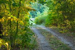 Autumnal alley, sandy road and colorful leaves Stock Photography