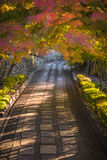Autumnal alley, very soft focus Royalty Free Stock Photos
