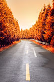 Autumnal asphalt road Stock Image
