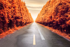 Autumnal asphalt road Royalty Free Stock Photos