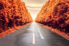 Autumnal asphalt road Royalty Free Stock Photos