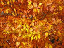 Autumnal atmosphere Royalty Free Stock Images