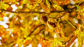 Autumnal atmosphere Royalty Free Stock Photos