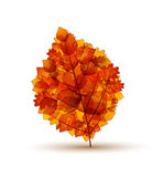 Autumnal Stock Image