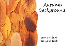 Autumnal backdrop Stock Photo
