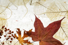 Autumnal background Stock Photos