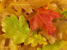 Autumnal background Royalty Free Stock Photography