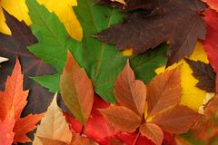 Autumnal background Stock Photography