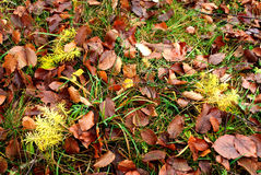 Autumnal background. With leafs and grass and plants Stock Image