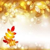 Autumnal background Royalty Free Stock Photos