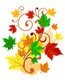 Autumnal background. With colorful leaves for seasonal decorations Stock Images