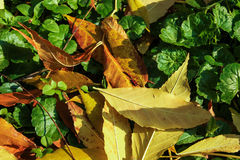 Autumnal background. With bug and dry leaf Stock Images