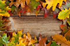 Autumnal background with copy space Stock Image