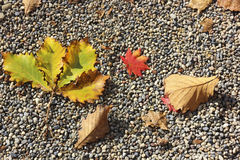 Autumnal background. Fallen autumn leaves on the pebbles Royalty Free Stock Photos