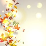 Autumnal background. With falling leaves Stock Image