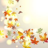 Autumnal background. With falling leaves Stock Photo