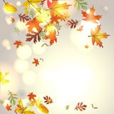 Autumnal background. With falling leaves Royalty Free Stock Photography