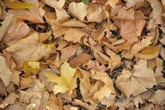 Autumnal Background Stock Photo