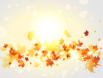 Autumnal background with maple leaves and lights Stock Photography