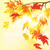 Autumnal Background. Vector Illustration. Royalty Free Stock Photography