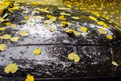 Autumnal background. Yellow fallen yellow leaves on a car after rain Royalty Free Stock Photos