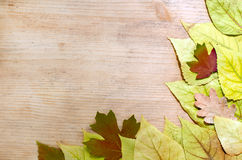 Autumnal background - yellow and red leaves of an old wooden board. Copy space. Top view royalty free stock photo