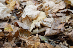 Autumnal backgrounds of the fallen leaves Royalty Free Stock Photos