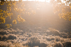 Autumnal backlight. The end of summer and the beginning of autumn Royalty Free Stock Photos