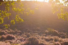Autumnal backlight Royalty Free Stock Images