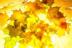 Autumnal backround Royalty Free Stock Photos