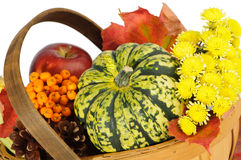 Autumnal Basket royalty free stock photography