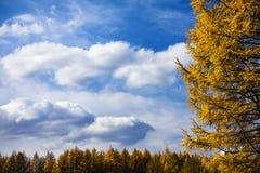 Autumnal beauty Stock Photo